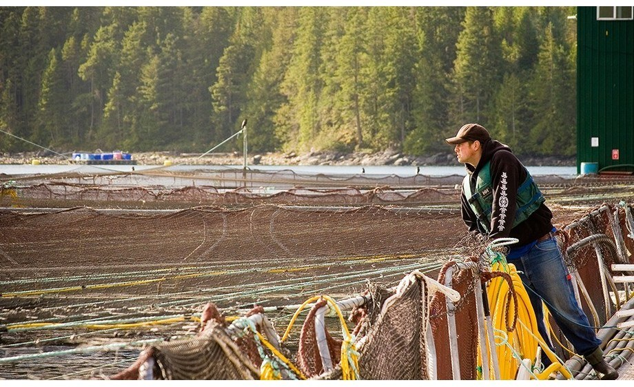 Farm staff in British Columbia are practising social distancing on sites. File photo: BCSFA.