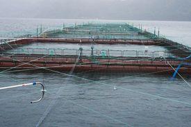 K J Eide Fiskeoppdrett leverer smolt til søsterselskapet Eide Fjordbruk. Selskapets visjon er at god smoltkvalitet er en av hovedforutsetningene for en sikker og effektiv produksjon av oppdrettslaks. Foto: Kjersti Fossåskaret Eltoft