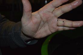 Driftsleder Øystein Eskeland visar fram den nyklekka rognkjeksen. Foto: Therese Soltveit
