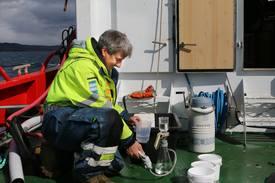 Forsker Geir Dahl-Hansen i Akvaplan Niva har utført feltundersøkelser i seks fjorder i Nordland de tre siste årene. Dette bildet er fra Sagfjorden.