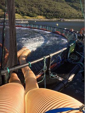 Grieg Seafood Finnmark satser på Thermolicer under sine avlusinger. Foto: GSF