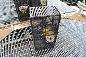 En fluktåpningsløsning som ble testet på teine for leppefiske. Foto: Magnus Petersen.