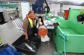 Forskeren brukte gjennomførte operasjonen ute på lokaliteten med fisk rett fra merden, hun håper på svar til høsten. Foto: Jo Espen Tau Strand.