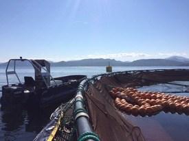 Rensefisk AS ute på oppdrag på merdkanten. Foto: Rensefisk AS.