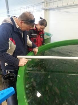 Daglig leder Mons Eivind Trolandsom også er en av eierne, inspiserer den aller første rognkjeksen selskapet skulle få fra Vest Aqua Base. Foto: Troland Lakseoppdrett.