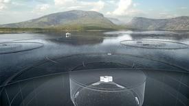 IFarm-konseptet i sjø. Fotoillustrasjon: Biosort/Cermaq.