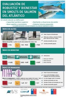 Afiche Evaluación Robustez y Bienestar de Smolts.