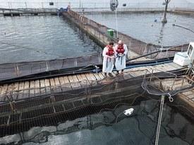 Monitoreo del comportamiento de alimentación con drone submarino. Foto: Skretting Chile.