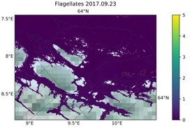 Concentración estimada de flajelados. Fuente: Sintef ocean.