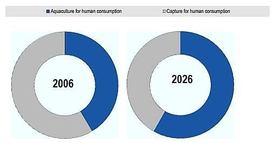 """Participación de la acuicultura en el consumo total de pescado para alimentación, 2006-2026. Fuente: OCDE/FAO (2017), """"Perspectivas Agrícolas OCDE-FAO 2017-2026""""."""
