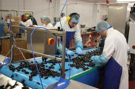 Processing shellfish at the SSMG factory in Bellshill. Image: Rob Fletcher.