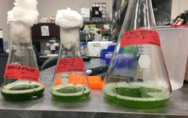 A look inside the MicroSynbiotiX laboratory.