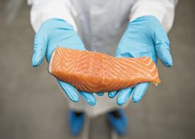 Feed is the most contributor of omega-3 to salmon, but hereditary traits also have an influence. Photo: Nofima