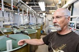 Terry Barry shows one of many tanks of fish being studied at the University of Wisconsin-Madison. Picture: Jeff Miller