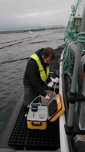 Prøvetaking fra medkandten for eDNA-analyse. Foto: Sigurd Hytterød/Veterinærinstituttet.