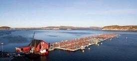 Sintef synliggjør store vekstmuligheter i Nord-Norge. Foto: Helgeland Havbruksstasjon