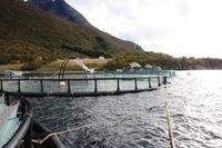 Et klimaregnskap kan gi bedrifter som er spesielt flinke i sitt klimaarbeid markedsfordeler, mener Hognes. Foto: Kvarøy fiskeoppdrett