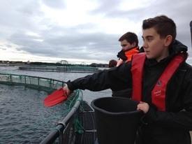 På matfiskanlegget fikk elevene mate fisken.Foto: Fisk OK