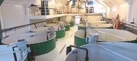 Rapporten synliggjør muligheten for utnyttelse av slam fra settefiskproduksjon. Foto: Aqua Optima