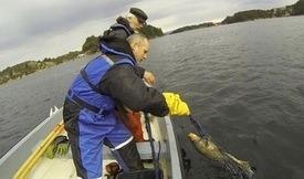 Å flytte oppdrettsanleggene lenger ut kan være et problem for kysttorsken, melder Havforskningsinstituttet. Foto: IMR.