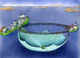 Vi har kjøpt «Aqua Star» av lokalbanken etter en konkurs, og vi skal bruke skipet i den virksomheten vi driver i dag – og i et nyutviklet prosjekt for avlusing i samarbeid med Aqua-Pharma AS, sier Ove Løfsnæs i AQS AS – tidligere Namsos Dykkerselskap AS. Foto: AQS AS.