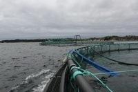Flytende akvakulturanlegg som ikke har anleggssertifikat, kan ikke brukes til akvakultur etter 1. juli 2013. Foto: Kyst.no