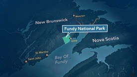 The salmon will head for the Bay of Fundy, where the nutrient-rich waters mean they will be ready to return to their home rivers in a year. Photo: FRS