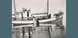 MK «Heland» på hvalfangst Foto: Sunnmøre Museum
