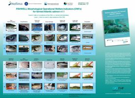 Fish farmers can download a poster displaying 14 OWIs. Click to enlarge. Image: Nofima