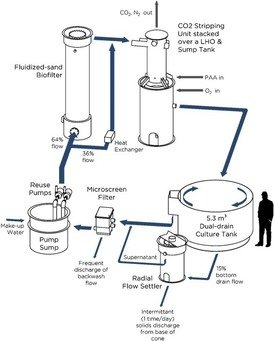 Water flow, process design, and point of PAA application for an individual experimental reuse system (9.5 m3) used during the study. Click to enlarge image. Illustration: Kata Sharrer, TCFFI Engineering Services.