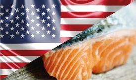 Estados Unidos ha sido uno de los principales receptores de salmón noruego durante el primer semestre. Foto: Archivo Salmonexpert.