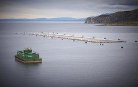 El cultivo de salmón aportaría una menor huella de carbono, según lo expresado por SalmonChile. Foto: Archivo Salmonexpert.