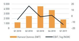 GSS's harvest was higher than in Q1 2018 but mortality caused a £2.2m write-down. Click on image to enlarge.