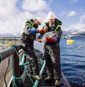Nordlaks produces 40,000 tonnes of salmon and trout a year in northern Norway. Image: Nordlaks.