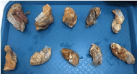 Algunos estómagos (sin contenido) de salmón Atlántico preservados y rotulados previamente al análisis. Foto: Informe técnico.