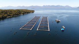 """El PTI """"Desarrollo Competitivo de Canales y Fiordos de Aysén"""", busca potenciar la competitividad de la industria del salmón en la región, principalmente en sus proveedores."""
