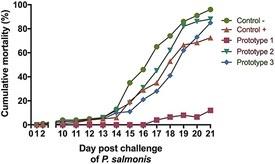 Resultados del desafío experimental con P. salmonis. Porcentaje de mortalidad acumulada de salmones Atlántico vacunados con los tres prototipos evaluados en el bioensayo. Fuente: Pontigo y col., 2021.