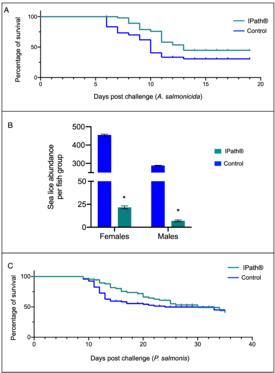 Sobrevivencia y carga de piojos de mar en salmón Atlántico vacunado con IPath. A) Probabilidad de supervivencia del salmón Atlántico en la infección por A. salmonicida. B) Abundancia de Caligus por grupo de peces; * Indica diferencias significativas (p <0,005). C) Probabilidad de supervivencia del salmón Atlántico en infección por P. salmonis. Fuente: Valenzuela-Muñoz y col., 2021.