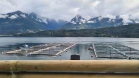 Normativa establece la certificación de centros de cultivo de salmón. Foto: Archivo Salmonexpert.