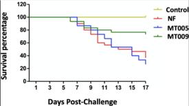 Porcentaje de sobrevivencia en el ensayo de infección experimental IP con la cepa 10094 de F. psychrophilum. Fuente: Santibañez y col., 2021.