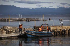 Mayor colaboración, uso sustentable de los recursos, entre otros, se plantea para la salmonicultura chilena. Foto: Archivo Salmonexpert.