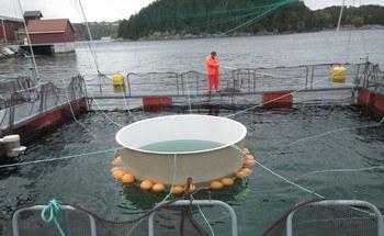 Havforskningsinstiuttet har gjort flere forsøk med snorkelmerder. Klikk for større bilde. Foto: HI.