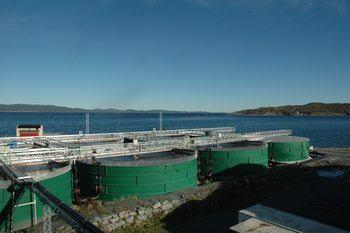 Njordsalmon sitt anlegg på Tjeldbergodden er kommet langt på produksjon av postsmolt i Norge. Foto: Njord Salmon.