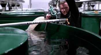 Anders Brandsegg pumper fisk fra et kar. Foto: Stian Holmen Lein/Namdal Rensefisk.