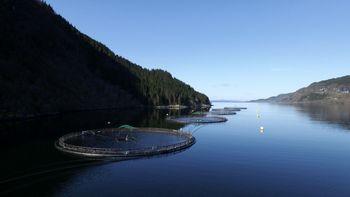Selskapet har to ulike lokalitetar, ein av dei er Dyvika, som ligg på sørsida av Førdefjorden vis-a-vis Vevring og like utanfor grensa til den nasjonale laksefjorden. Foto: Flokenes Fiskefarm.