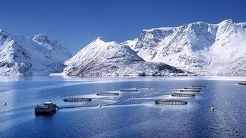 Lerøy har hatt rekordlave tall på rømming i 2018. Oppdrettsanlegg i Nord-Norge. Illustrasjonsfoto: Lerøy Seafood Group AS.