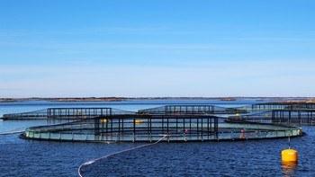 SINTEF Ocean har avlagt rapport på beste praksis for lusetelling på merdkanten. Illustrasjonsfoto: SINTEF.