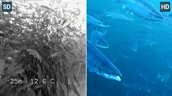 A splitscreen image showing the difference between standard definition and high definition. Steinsvik is now going one step further by using 4K.