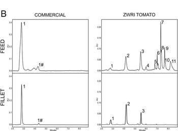 Composición de ketocarotenoides en el alimento y en el filete de ambas dietas, comercial (comnercial) y con tomate geneticamente modificado (ZWRI tomato). Se puede apreciar que la fijación de ketocarotenoides en filetes de truchas alimentadas con la dieta ZWRI es mayor. Fuente: modificado de Nogueira y col., 2017.
