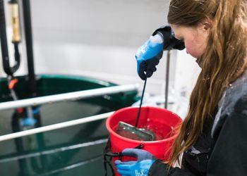 Namdal Rensefisk har produsert 1,6 millioner vaksinert lusespisere i 2018, og 800 000 uvaksinert yngel. I 2019 er målet å produsere rundt halvannen millioner rognkjeks. Foto: Namdal Rensefisk/Stian Holmen.